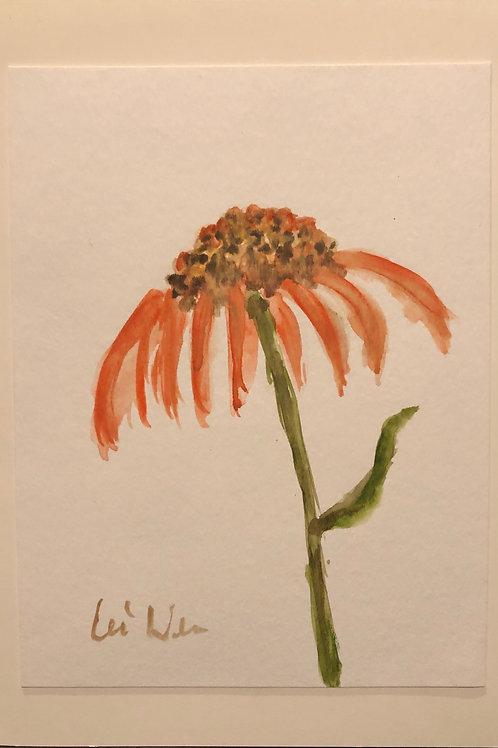 Orange Cornflower Original Watercolor Greeting Card