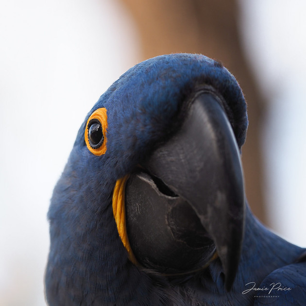 parrot pet photography