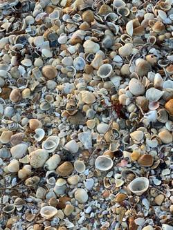shells_sm
