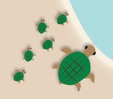 Turtles 5-21.jpg