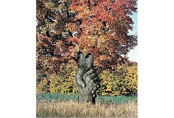 arbre rb.jpg