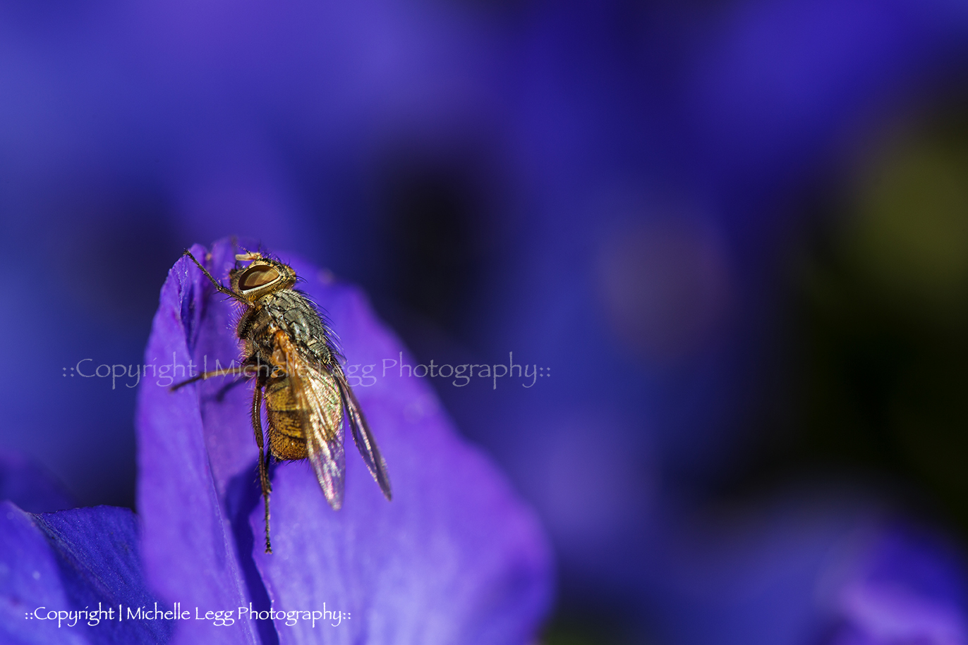 Fly on Purple