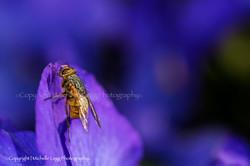 Fly on Purple