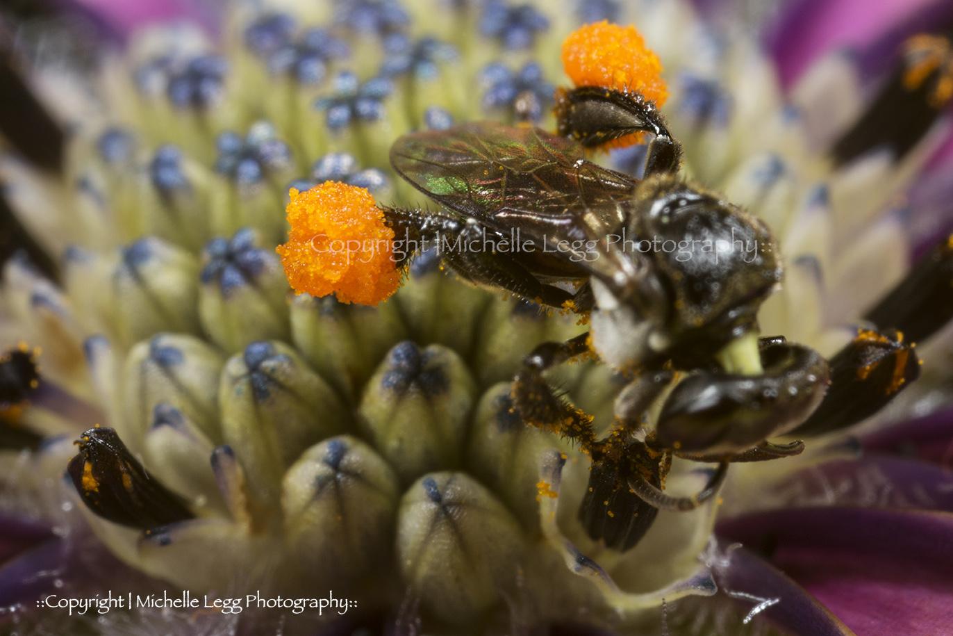 Pollen Sack