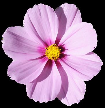blossom-flower-transparent-image-13.png