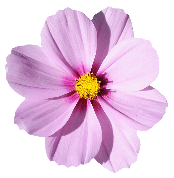 blossom-flower-transparent-image-13.png