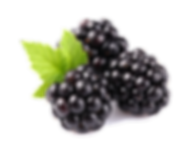 Blackberry-Fruit-Free-Download-PNG.png