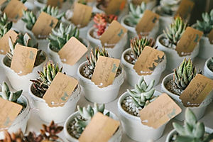 свадебный сувенир, оформление свадьбы, растения для свадьбы, сердце с суккулентами