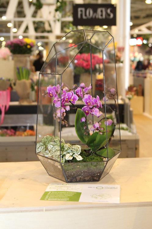 флорариум с орхидеей, террариум с растениями, флорариум спб, орхидариум