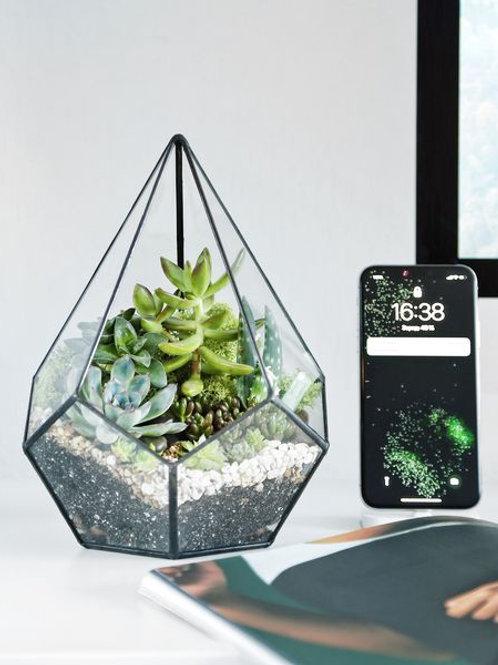 флорариум с суккулентами, террариум с растениями, флорариум спб