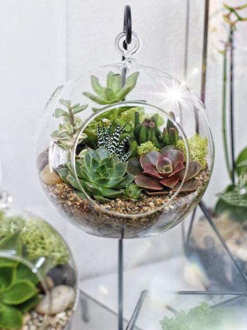 подвесной флорариум, подвесная ваза с суккулентами