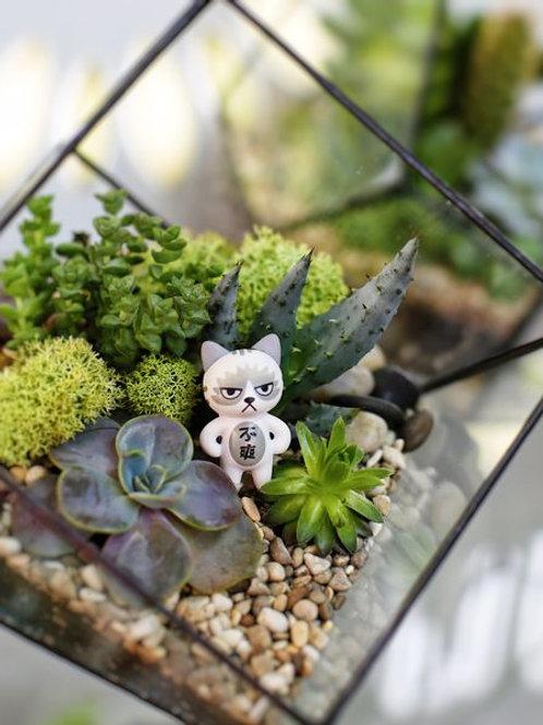 флорариум спб, геометрический флорариум, флорариум с фигуркой, ваза с суккулентами