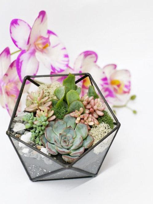 икосаэдр, флорариум спб, терриариум с растениями, флорариум