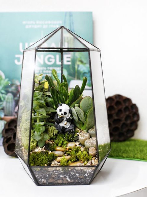 флорариум спб, терриариум с растениями, геометрический флорариум