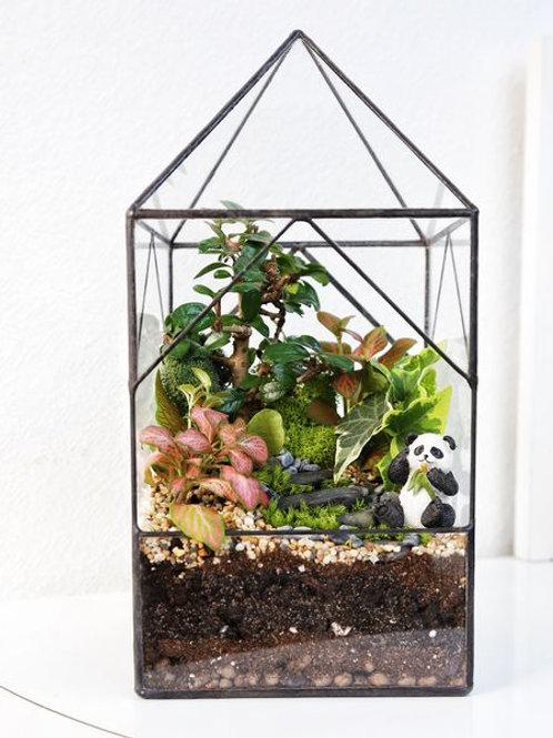 флорариум спб, терриариум с растениями, геометрический флорариум, бонсай