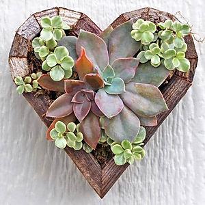 оформление свадьбы, растения для свадьбы, сердце с суккулентами