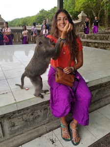 monkey, bali, bali monkeys, monkey temple, wanderprenuer