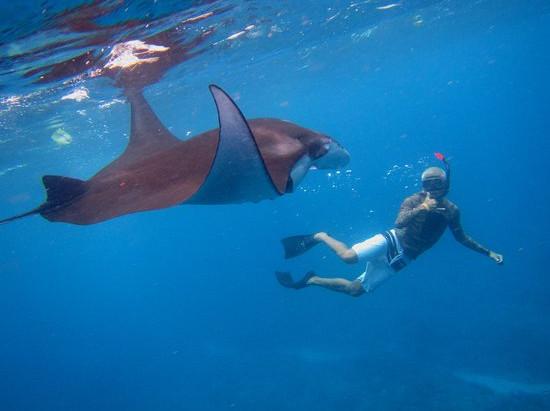 Snorkeling in Nusa Islands off of Bali