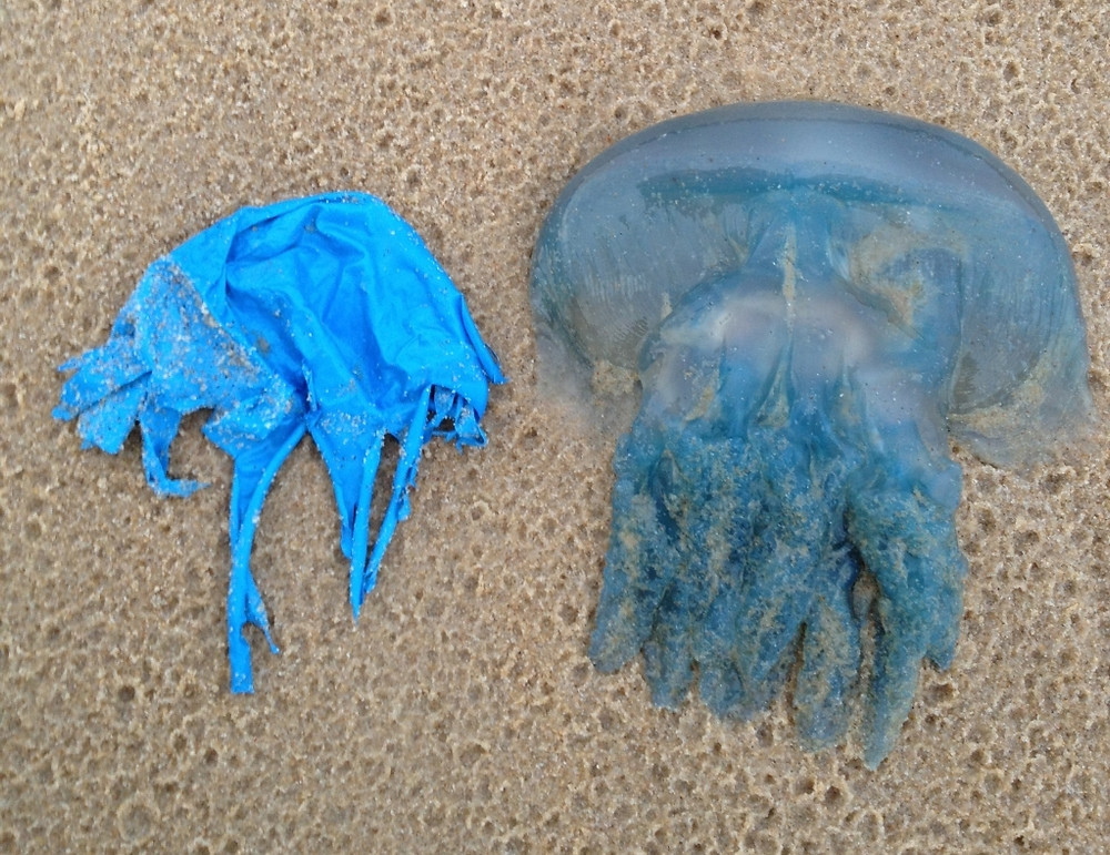balloons, sustainability, eco friendly, sustainable lifestyle, plastic free, waste free, ocean conservation, jellyfish, sea jellies