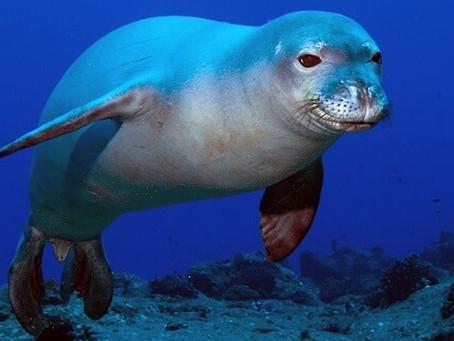 ECO Alphabet: Week 5: Endangered Species