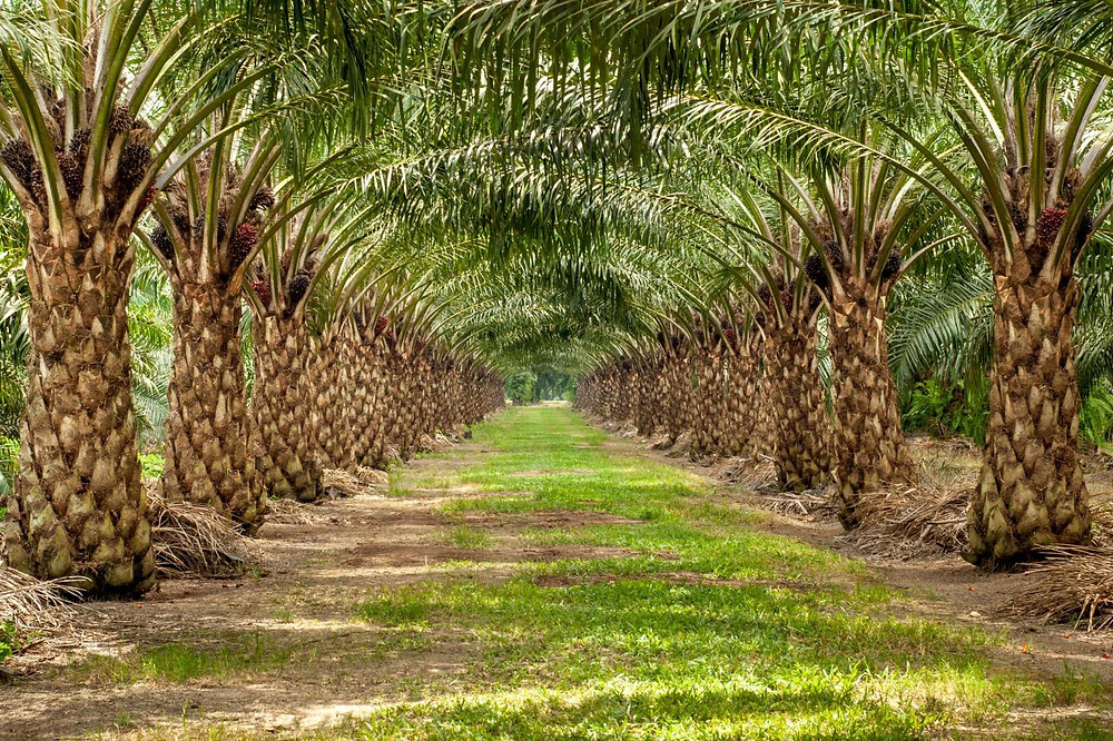 palm oil, global warming, food with palm oil, unsustainable palm oil, climate change