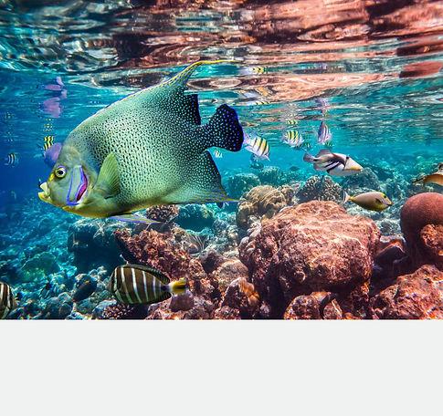 Life Below Water.jpeg