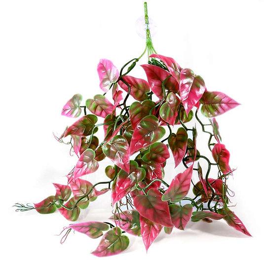 Pangea Plants - Rød