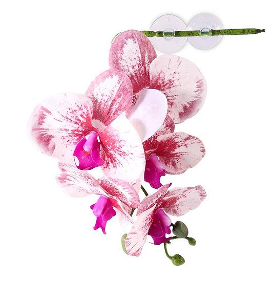 Pangea Hengende Orkidè - Hvit