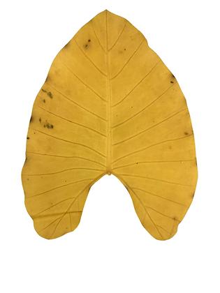 BeLeaf | Natural Yellow