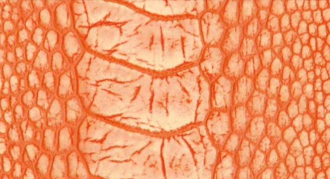 Ostrich Leg Leather   Stonewash   Tangerine