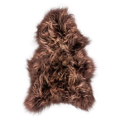 Icelandic Longhair    Chestnut Brisa