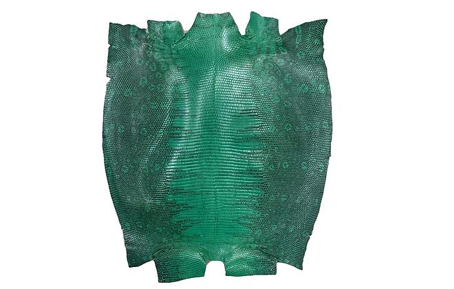 Lizard | Green | Back Cut