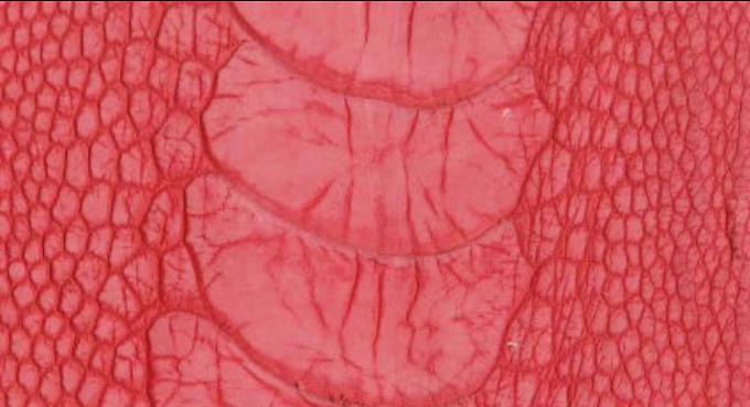 Ostrich Leg Leather | Stonewash | Scarlet Red