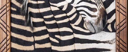 Wall Portrait | Zebra