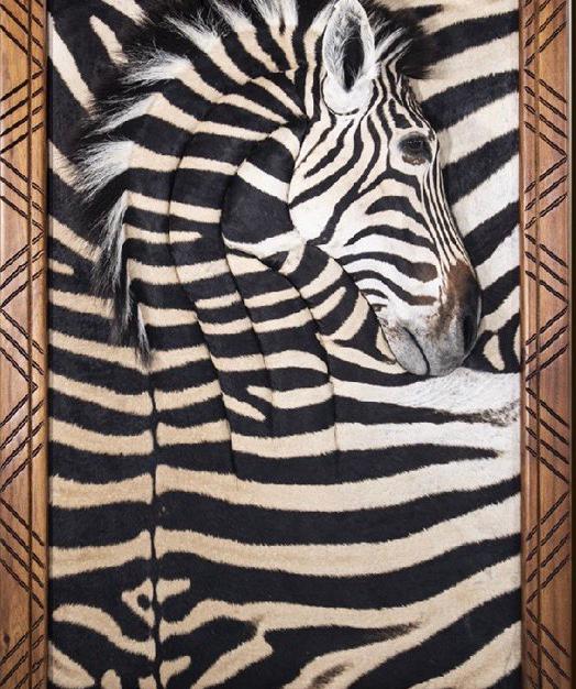 Zebra Wall Portrait