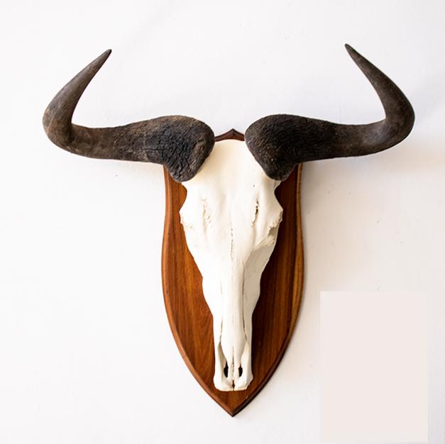 Wildebeest Skull Mount