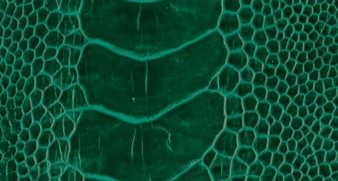 Ostrich Leg Leather | Brilliant Green | Glazed Finish