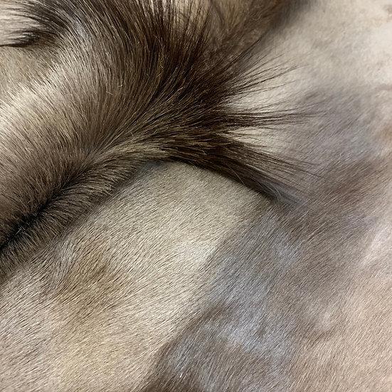 African Black Springbok Hide
