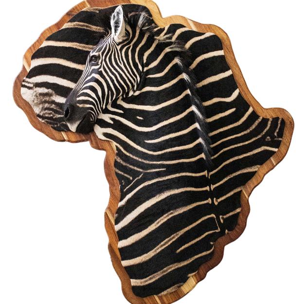 Zebra Africa Wall Portrait