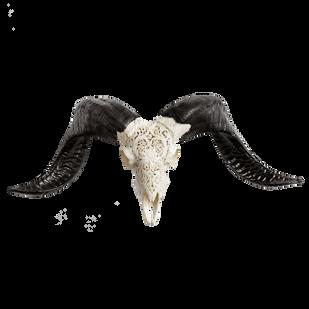 Carved Ram Skull