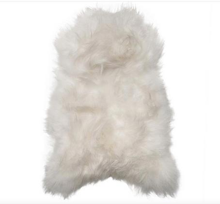 Icelandic Longhair    Ivory White