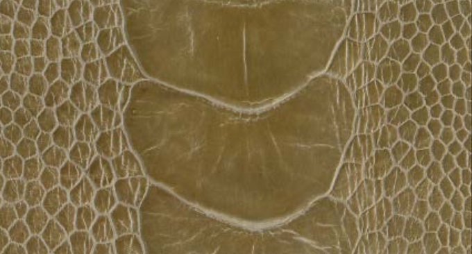 Ostrich Leg Leather   Mouse   Glazed Finish