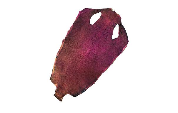 Stingray Leather   Pink Rainbow   Hologram Polished Finish