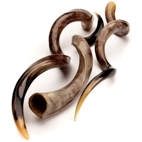 Kudu Polished Horns for Decoration