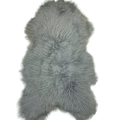 Icelandic Longhair    Silver Grey