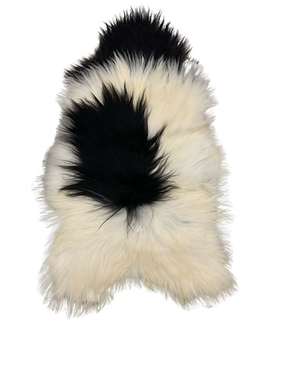Icelandic Longhair    Natural Ivory Spotted
