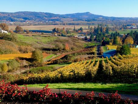 Our Vineyard Partner Series: Tualatin Hills AVA
