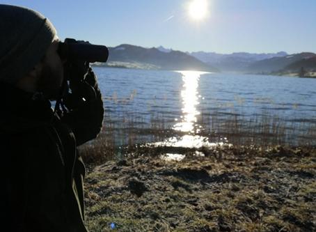 Wasservogelzählung Sihlsee 2019/2020