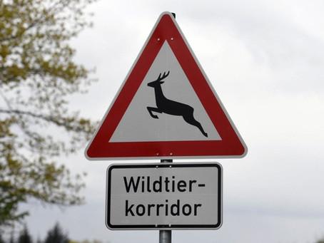 Wildtiere müssen wandern!