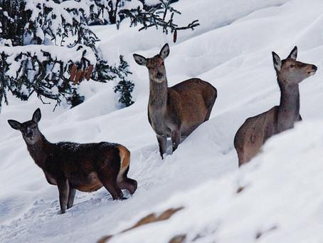 Dringender Appell an die Bevölkerung: Rücksichtnahme auf die Wildtiere